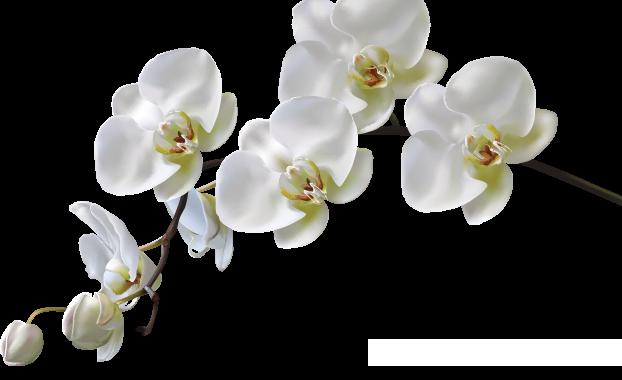 herzensarbeit-paarberatung-orchideen